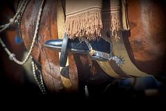 Firme en los estribos (Eduardo Amorim) Tags: horse southamerica argentina caballo cheval spur sperone pferde poncho cavallo cavalo gauchos pferd ayacucho pampa loro hest pala hevonen apero gaucho staffa 馬 américadosul loros stirrup häst platería gaúcho estribo 말 amériquedusud provinciadebuenosaires лошадь recado gaúchos 马 sudamérica esporas suramérica américadelsur סוס südamerika espora حصان pilchas espuelas άλογο buenosairesprovince pilchasgauchas steigbügel recao pampaargentina americadelsud plateríacriolla espuela ม้า americameridionale eduardoamorim estribera estrivo étrier pampaargentino ঘোড়া