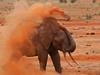 Bathing Tsavo-style! (Rainbirder) Tags: kenya africanelephant tsavoeast loxodontaafricana rainbirder