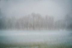 trees, ice and fog (JMS2) Tags: trees winter lake ice nature fog landscape sony scenic artsy icm larchmontreservoir intentionalcameramovement