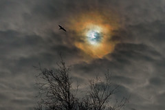 20 03 15 Eclipse (stumpyheaton) Tags: uk england sky sun bird clouds outside march solar eclipse nikon day cheshire widnes halton d5100