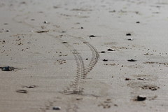 Tracks (ttenra68) Tags: beach bicycle sand tracks