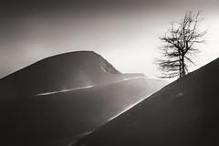 Le long de la crête - Along the ridge (jeff_006) Tags: mountain snow ski tree landscape wind olympus ridge summit pro f28 touring ascent 40150 em5