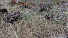 (Polotaro) Tags: bird nature pen olympus  zuiko  3      fzuiko300mmf45 epm2