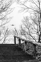 Vuelo directo (JesusChuecaFotografia) Tags: street white black blanco nikon europa arboles y negro streetphotography contraste aereo escaleras avion dinamarca viborg expontaneo