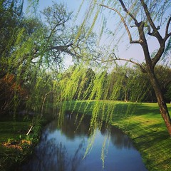 #earth #world #place #china #cn #hangzhou #杭州 #西湖 #xihu #westlake #green #willow #tree #breeze #grass #spring #warm #holiday #relax #walking #sunshine #reflection #history #street #day #travel #afternoon #fun #iphone (CalvinShoot) Tags: world china street city travel trees shadow vacation plants holiday reflection tree green history love tourism grass sunshine garden walking square relax outdoors spring warm afternoon photographer view place outdoor earth breath memories lawn scene spot westlake willow squareformat memory hangzhou breathe breeze mayfair 西湖 杭州 xihu photographing iphone iphoneography instagramapp uploaded:by=instagram