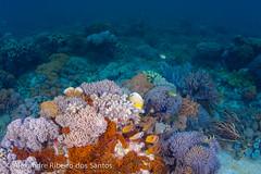 Underwater purple landscape (Alexandre R. dos Santos) Tags: cruise fish coral indonesia underwater wideangle snorkeling adventures abel lombok komodo underwaterphotography pinkbeach pantaimerah abeltours abeltravel lomboktraveladventures