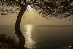 i del nord (.carleS) Tags: sea sun sol canon eos mar mediterranean alba pins amanecer pinos nou cala mediterrneo poble mediterrani moraig 60d benitatxell caeduiker