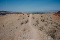 5R6K2575 (ATeshima) Tags: arizona nature havasu