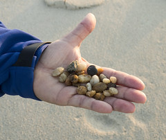 Beach Bounty (Cocoabiscuit) Tags: ocean beach evening olympus shore delaware bethanybeach em5 cocoabiscuit