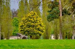 Versailles - 71 devant le Grand Trianon (paspog) Tags: park france castle spring versailles april schloss avril chteau parc printemps castel frhling 2016