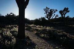 Joshua Tree 04.jpg (sagefool5) Tags: california camping nature landscape nationalpark unitedstates desert outdoor joshuatree 2016joshuatree