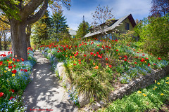 _DSC2536 Northport Cottage (Charles Bonham) Tags: flowers trees house stone architecture garden tulips stonework cottage flowerbed sonya7r charlesbonhamphotography sonyzeissfe1635mmf4