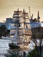 Tallship Mercedes during sunset (michaelbeyer_hh) Tags: mercedes sailing hamburg tallship hafengeburtstag sailship penf