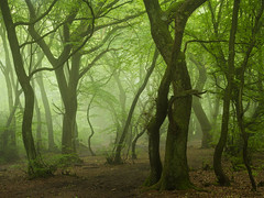 Serpentine (Damian_Ward) Tags: mist tree woodland photography chilterns buckinghamshire nationaltrust bucks thechilterns chilternhills coombehill damianward lowscrubs damianward
