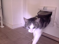 20160522-142955-i-1 (Catflap central) Tags: cat catdoor katzenklappe raspberry pi camera cats catflap kattenluik catflapj2nnl pet meow