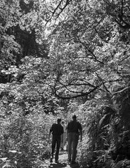 under the canopy (westernforesters) Tags: bw silhouette portland trail event verdant canopy leafy forestpark wflcspring2016