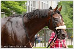 Effinex (Spruceton Spook) Tags: horses horseracing belmontpark starsandstripesfestival suburbanhandicap effinex
