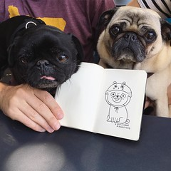Pugs, rosemary fries, + drawing pug bears with @gemmacorrell + Anthony  (Andrea Kang) Tags: dog cute dogs drawing pug pugs gemmacorrell instagram ifttt