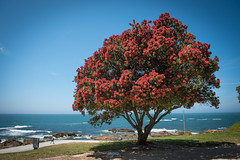 Mixture of colors at beach in Porto, Portugal (marcioreginaldo) Tags: tree beach portugal colors porto d750 mixture