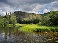 Klusha Creek & Conglomerate Mountain (MIKOFOX  Show Your EXIF!) Tags: canada kayaking conglomeratemountain grass braeburn yukon marshgrass lumixfz35 canoeing july landscape northklondikehighway riverexpedition creek fz35 klushacreek mikofox showyourexif summer