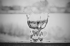 Epic Coffee Splash BW (HugsNotDrugs11385) Tags: blackandwhite bw butterfly butterflies bugs mug splash blackandwhitephotography splashphotography coffeesplash