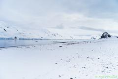 A7R-_DSC5744 (Roy Prasad) Tags: ocean travel cruise sea mountain snow reflection ice expedition water rock landscape island penguin boat ship sony antarctica chick glacier whale orca iceberg zodiac prasad halfmoon chinstrap royprasad halfmoonisalnd