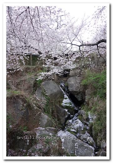 화개십리벚꽃길24