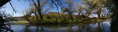 Kleine Insel im Rhein
