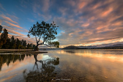 Water reflection lonel tree (James Yu Photography) Tags: newzealand reflection sunrise 5 years another lakewanaka lonelytree jamesphotography jameszhenyu