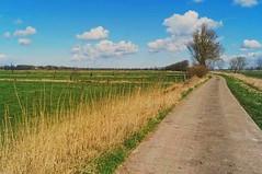 Wesermasch, Brake (hamburgerkunst.com) Tags: sky sun green clouds landscape spring perspective wiese himmel wolken willow grn landschaft sonne perspektive frhling fluchtpunkt