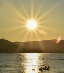 Lake Hume sunrise (phunnyfotos) Tags: lake mountains pelicans sunrise landscape spring nikon australia victoria hills d750 vic sunrays sunbeam huon ebden northeastvictoria lakehume phunnyfotos nikond750