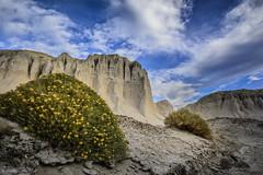 Flora patagnica (Mauro Esains) Tags: patagonia flores hojas flora nikon paisaje cielo nubes comodoro cerros aire libre astra chubut espinas rivadavia amarillas grietas arbusto arcilla nikonsigma patagnica