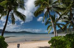 Hamilton Island (Globalviewfinder) Tags: tree beach island islands hamilton australia palm qld queensland tropical whitehaven catseye whitsunday cateye