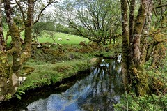 The River Fowey on Bodmin Moor, Cornwall (Explored) (Baz Richardson (trying to catch up!)) Tags: cornwall sheep farmland bodminmoor explored riverfowey woodedvalleys