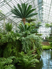 Chicago, Garfield Park Conservatory, Fern Room with Pond (Mary Warren (6.8+ Million Views)) Tags: plants chicago green nature water pool pond flora conservatory ferns garfieldparkconservatory fernroom