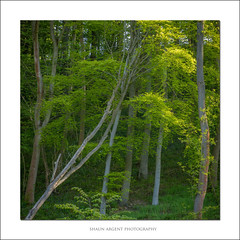 Lean on me (shaun.argent) Tags: trees tree nature leaves forest woodland landscapes spring woods flora seasons shaunargent