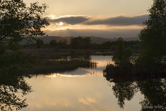 Calm Evening on the Bog (shawnraisin d+p) Tags: uk trees tree water wales landscape spring pond westwales unitedkingdom cymru gb bog wetland tregaron corscaron shawnwhite canon6d