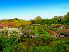 Rose Garden (dimaruss34) Tags: newyork brooklyn spring image brooklynbotanicgarden dmitriyfomenko