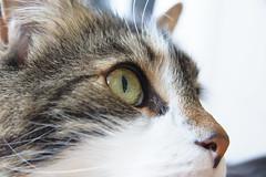 20160522-D7-DS7_1928.jpg (d3_plus) Tags: cats animal japan cat nikon bokeh daily  28105mmf3545d nikkor  kanagawa dailyphoto  thesedays  28105 28105mm  zoomlense     28105mmf3545 d700 281053545 nikond700 aiafzoomnikkor28105mmf3545d 28105mmf3545af aiafnikkor28105mmf3545d