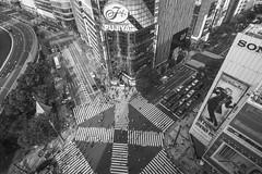 GINZA CROSSING (Tokyo Street Photography) Tags: street summer blackandwhite bw blancoynegro monochrome japan japanese tokyo ginza blackwhite nikon crossing outdoor gap streetphotography monochromatic d750  nippon  blkwht grayscale shitamachi scramble fujiya sonybuilding  monokuro ajpscs ginzacrossing kosatenginza