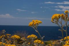 Minorque (14) (Miarno) Tags: mer nature vacances soleil eau sable biosphere espagne plage menorca balares minorque