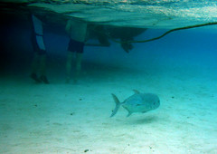 It's behind you!!! (Magryciak) Tags: ocean trip travel blue sea people fish colour nature water swim island lumix person snorkel pacific lagoon panasonic tropic cookislands rarotonga fins waterproof islandlife 2015