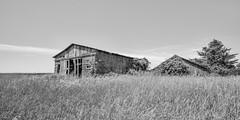 Sinking in Iowa (Oliver Leveritt) Tags: nikond610 afsnikkor1635mmf4gedvr oliverleverittphotography wideangle illinois building structure farm barn rural monochrome blackandwhite sepia platinum