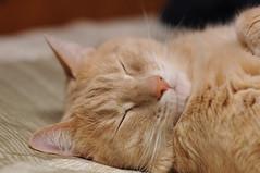 DSC_0279 (Cropshy) Tags: 50mmf14 cat