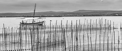 Paseo por l'Albufera (Teo Martnez (temege)) Tags: barco albufera otoo blanco y negro caas boat autumn