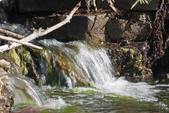 Mercer Arboretum (jnorth0226) Tags: arboretum mercer