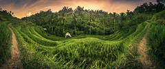 Bali - Tegalalang Panorama (claudecastor) Tags: travel sunset bali rot nature sunrise indonesia landscape asia asien southeastasia sdostasien sonnenuntergang rice terrace natur terraces reis ricefield landschaft sonnenaufgang indonesien reisfeld reise terrassen jatiluwih