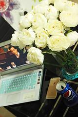 (Willey 3K) Tags: wood shadow brown sun white black flower green love bag shoe gold beige dress lace laptop headset romantic pepsi hdr iphone alpacino hrd ورد حب خشب اسود اخضر فستان بيبسي بني احمر ابيض ذهبي لاب توب سهره رومانسي بيج لابتوب حذاء شنطه سماعة ايفون naturaltonemapped سواريه