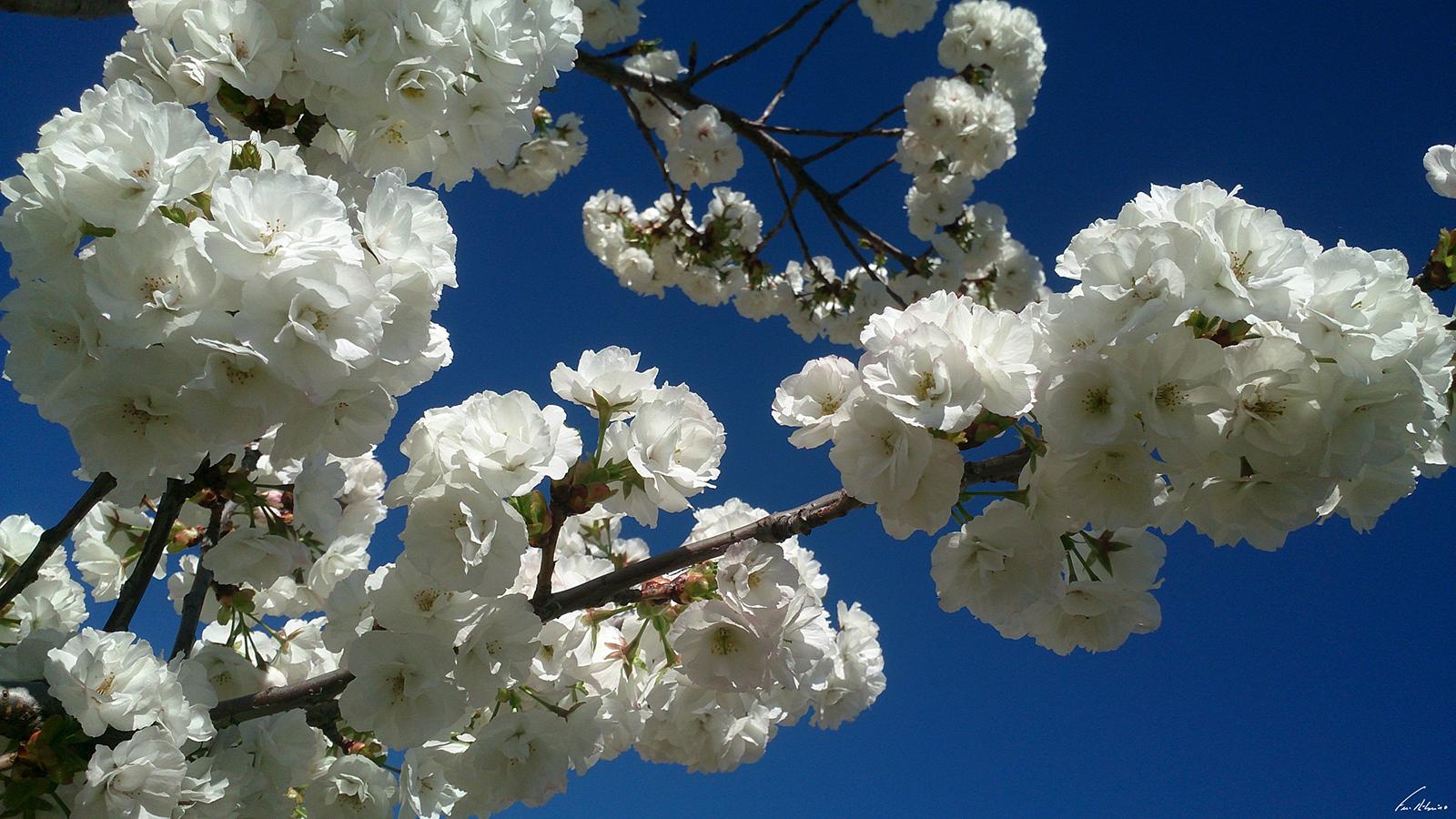 1600-primavera