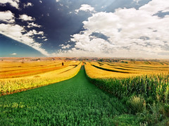 butterfly wings - again.:) (Katarina 2353) Tags: summer landscape serbia agriculture vojvodina serbiainspired